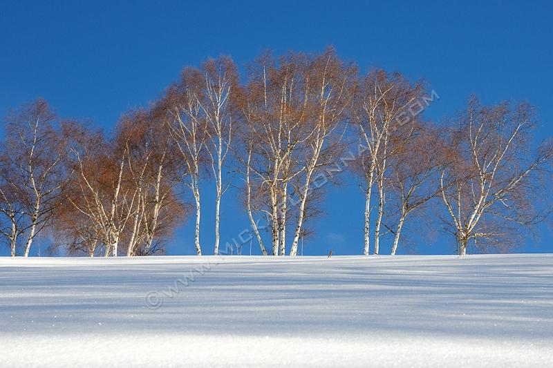 Neige en Vallée d'Aure - Rangée d'arbres