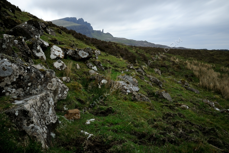 Ile de Skye - Ecosse - The Old Man of Storr