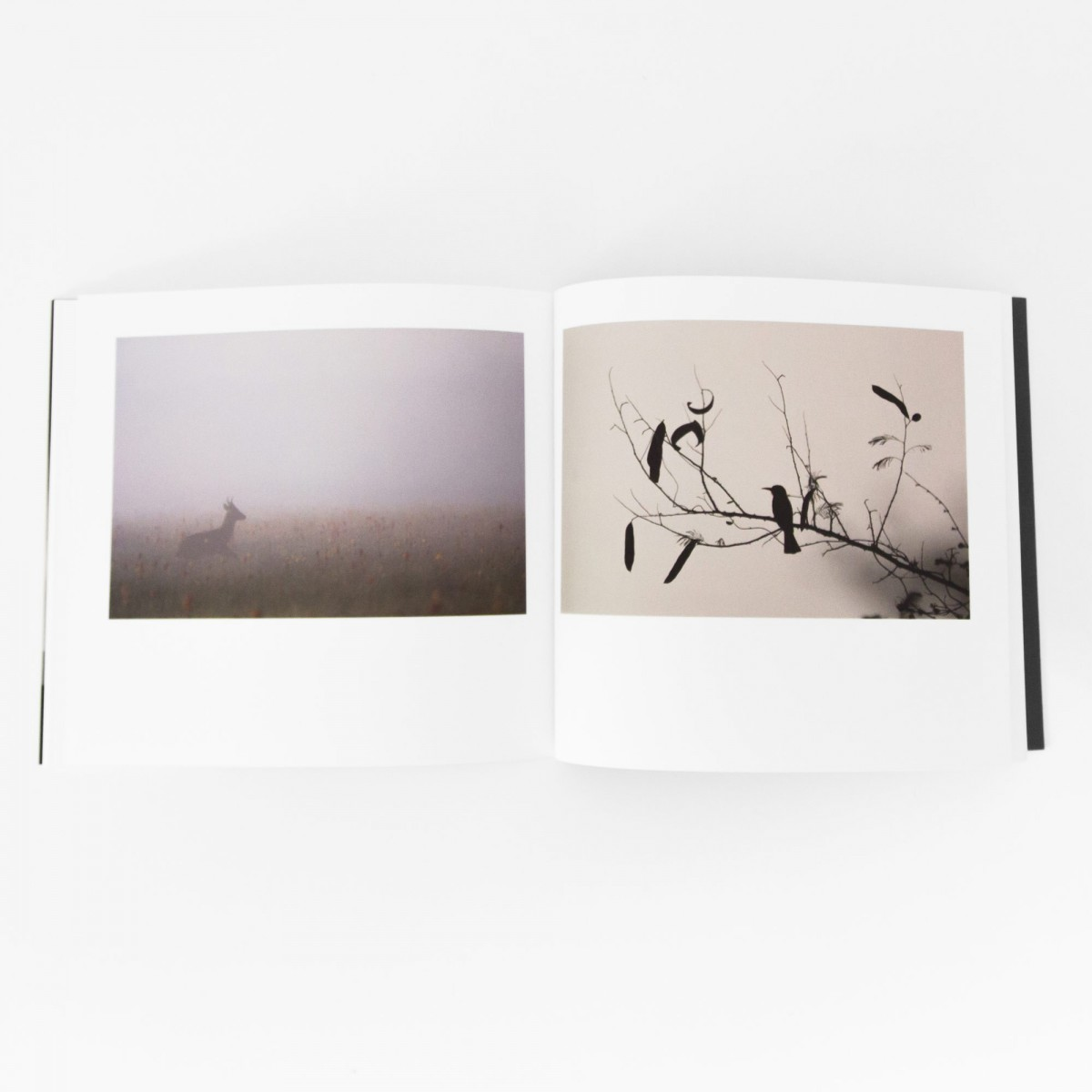 De crépuscule en crépuscule - Vincent Munier - Livre