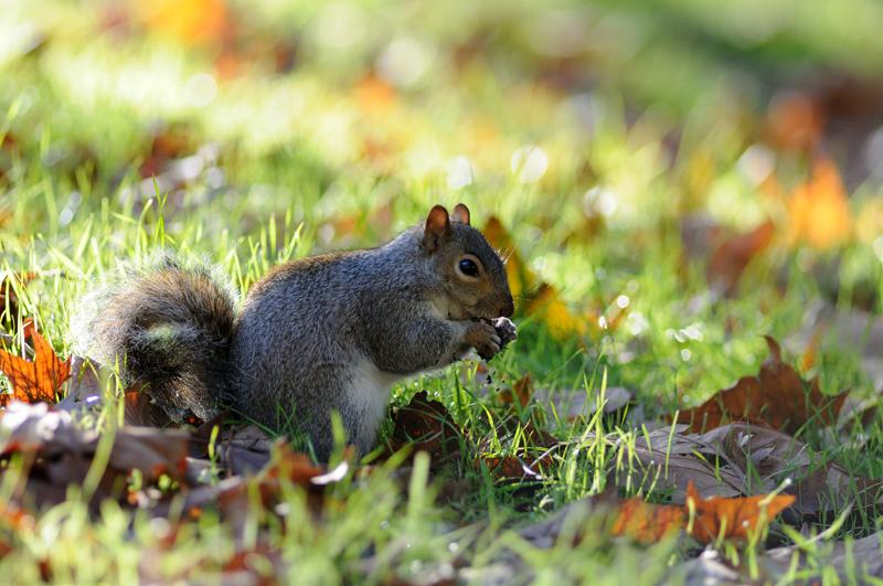 Photo d'écureuil bien exposée