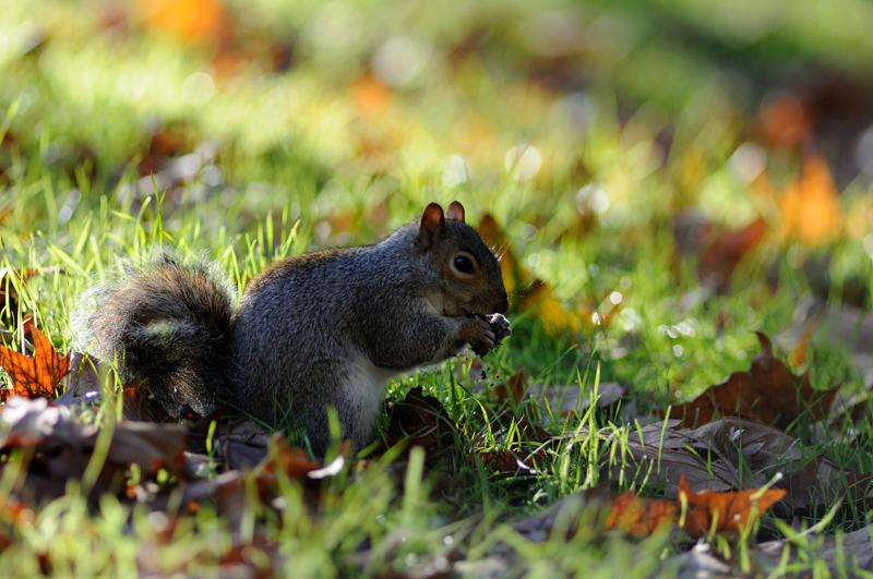 Photo d'écureuil sous-exposée