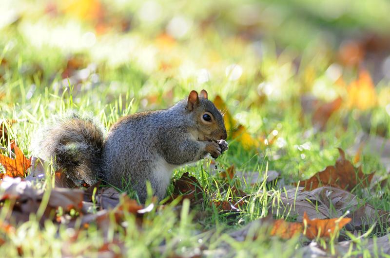 Photo d'écureuil sur-exposée