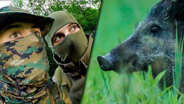 Web-série Animalis - Photographie animalière
