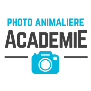 Photo animalière Académie - Régis Moscardini