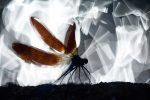 Superbe photo ! La nature est un spectacle et cette photo nous le montre bien. Ces jeux de texture en arrière plan et sur les ailes du calopteryx sont délicieux. Félicitations.