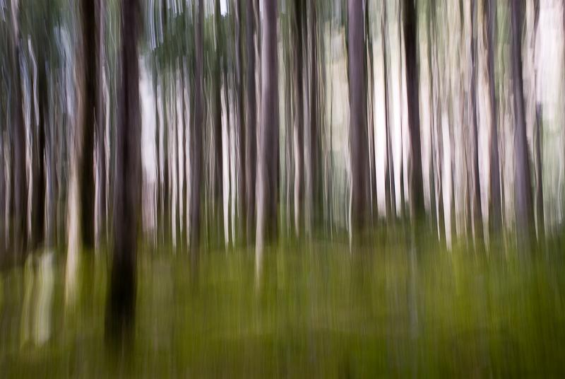 Forêt - Pose longue - Pyrénées