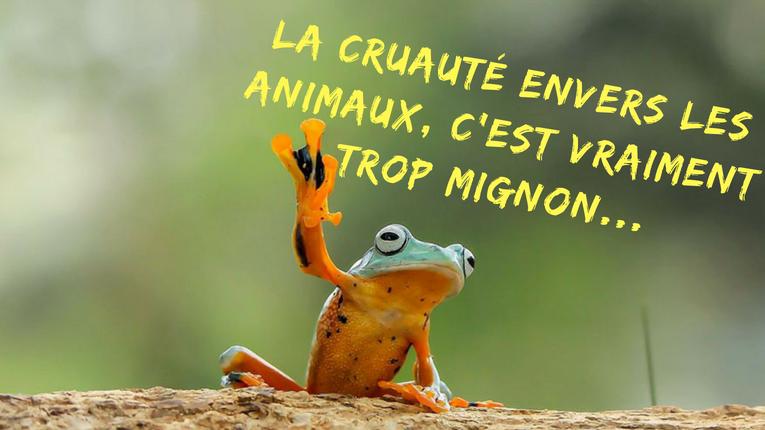 Un blog, des articles, des débats !!! La-cruaut%C3%A9-envers-les-animaux-cest-vraiment-trop-mignon...