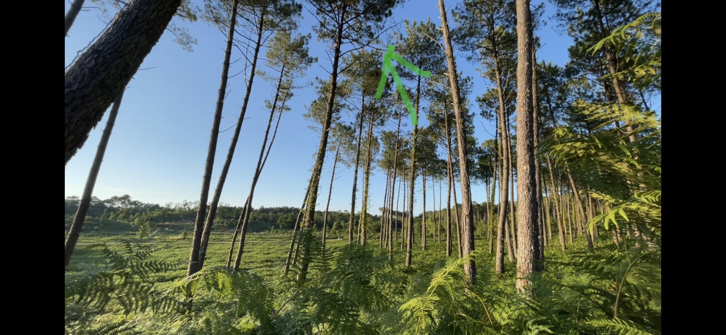 Drone Fpv dans les pins - Hossegor - Dji Fpv Combo